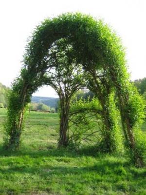 grüner sichtschutz terrasse